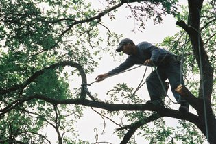 Tree Removal Work in Austin TX