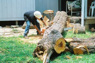 Tree Service Work in Austin TX