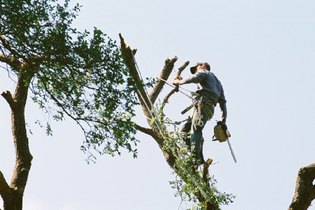 Tree Services in Austin TX